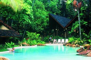 Tropical Themed Inground Pool